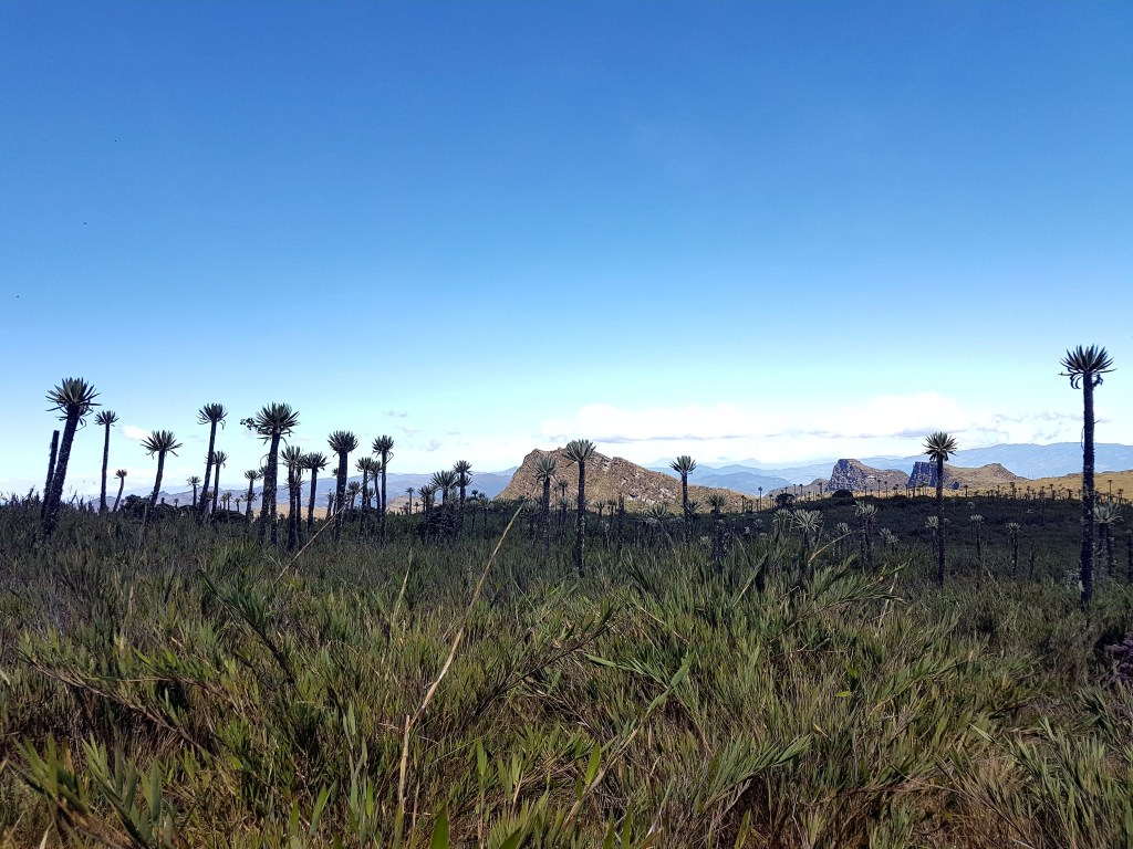 View of Frailejones in distance at Chingaza