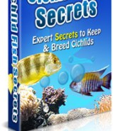 how to breed cichlid fish