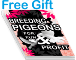how to breed pigeons, breeding and raising pigeons, raise pigeons