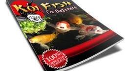 Koi Fish for beginners