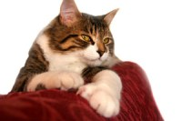 How To Keep Cats from Urinating on Furniture: Cat Training
