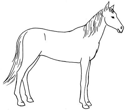 Another way to draw horses