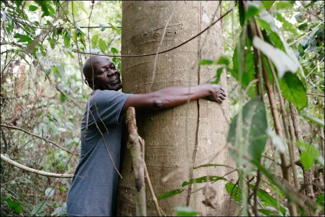 Ecosia's Mission is to Plant Trees