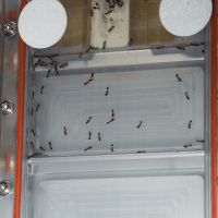 How To Get Rid of Ants in the Kitchen  How to Get Rid of ...