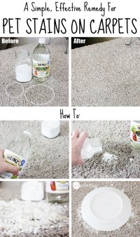 How To Remove Pet Stains On Carpets Easy | How To Instructions