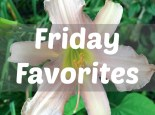 Friday Favorites for June 16, 2017