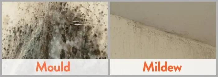 How To Remove Black Mold From Walls   HowToRemoveBlackMold.com