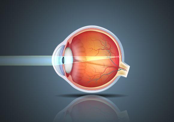 eye anatomy hoya vision