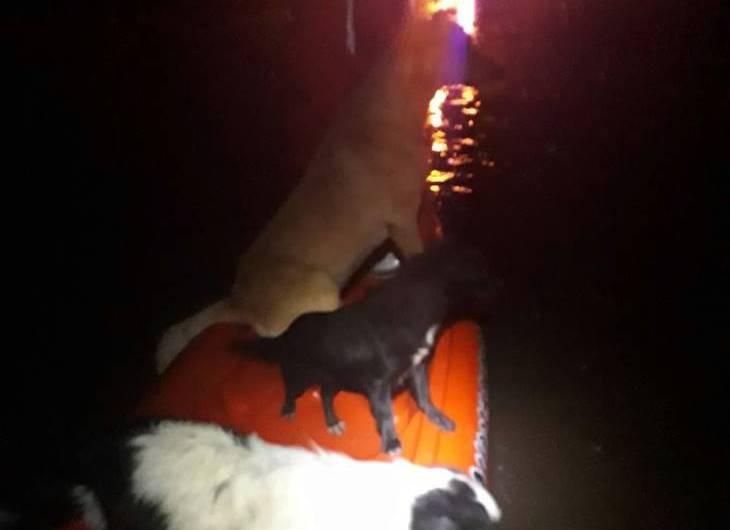 Rescate de mascotas, tapial caído y diversos «sucesos» atendidos por Protección Civil