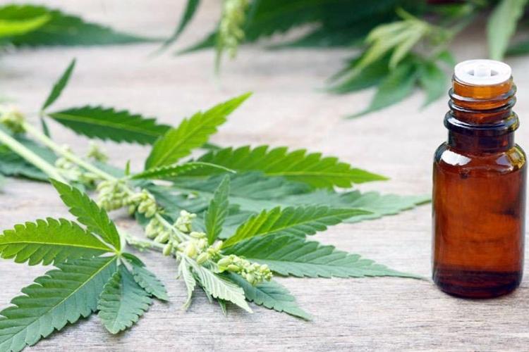 La Justicia ordenó al Estado suministrar cannabis medicinal