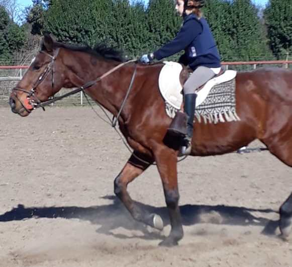 Taller de Equitación para niños en la Sociedad Rural