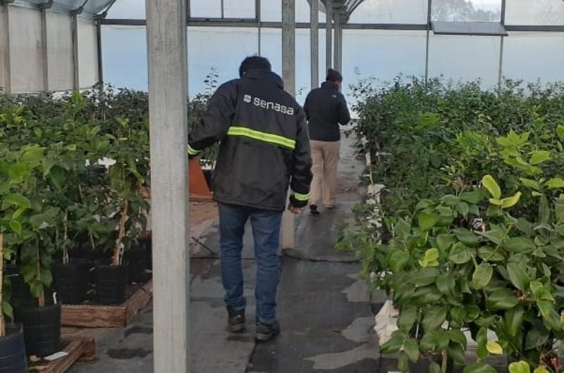 Inspecciones a viveros del norte de la provincia de Buenos Aires