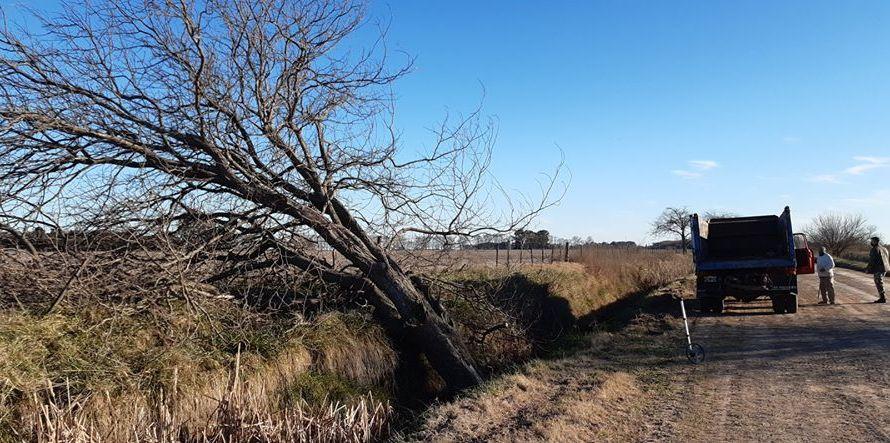 Suipacha: Hombre pierde la vida al caerle un árbol encima