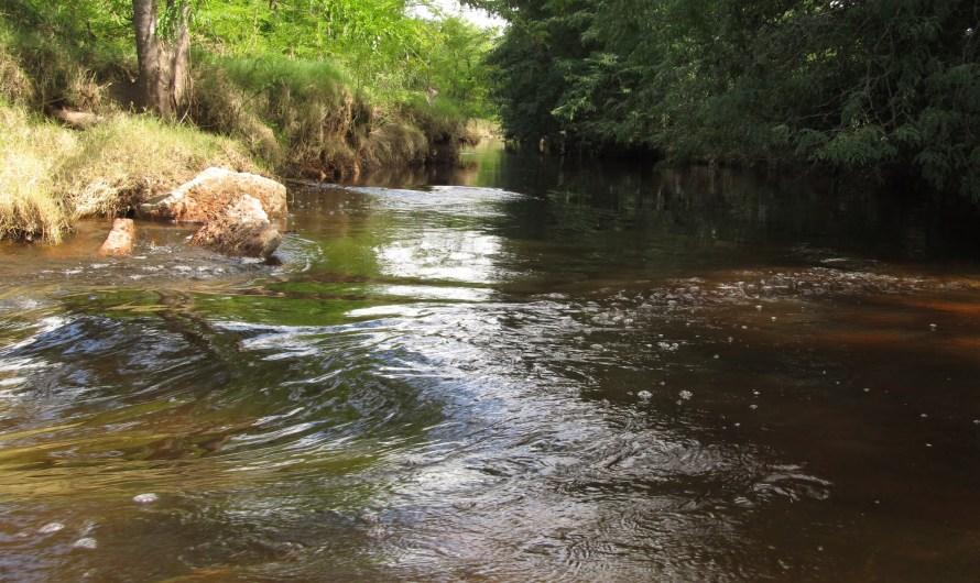 Por los cursos de agua dulce en Mercedes