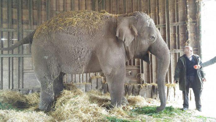Organizaciones denunciaron que murió Sharima, la elefanta del Zoo Luján
