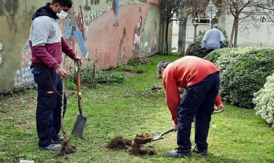 Embellecimiento: plantan durazneros en el Hogar Ulises D`Andrea y en el hospital