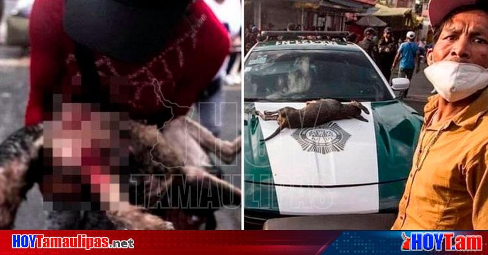 Hoy Tamaulipas - Violencia Polica mata a balazos a un perro en Tepito
