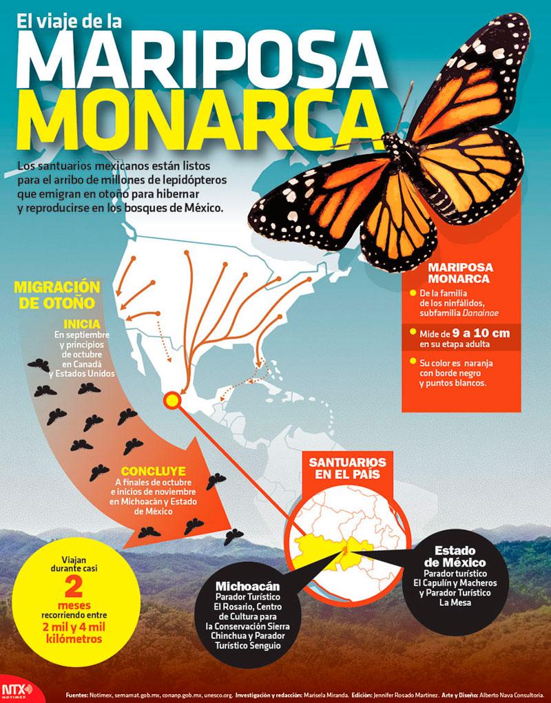 Resultado de imagen para infografia de la mariposa monarca