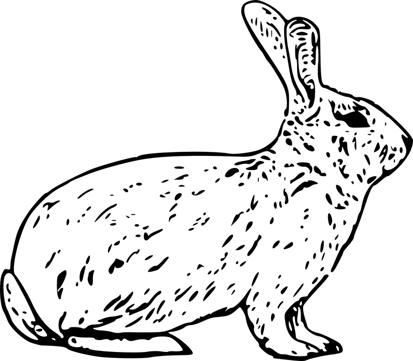 Lavender Brown's pet rabbit, Binky, is killed by a fox