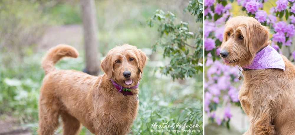 Tips for bringing dog to portrait session