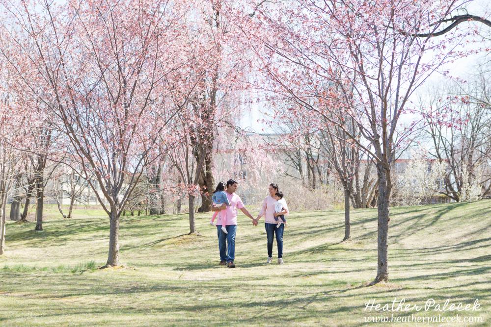 Cherry Blossom Family Portraits | Ewing, Central NJ Family Portrait