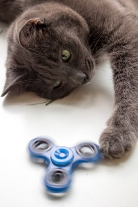 a cat playing with a spinner