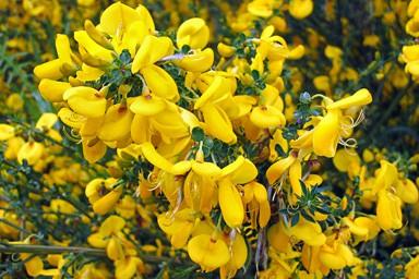 Yellow Flowers Close Up Photo Print
