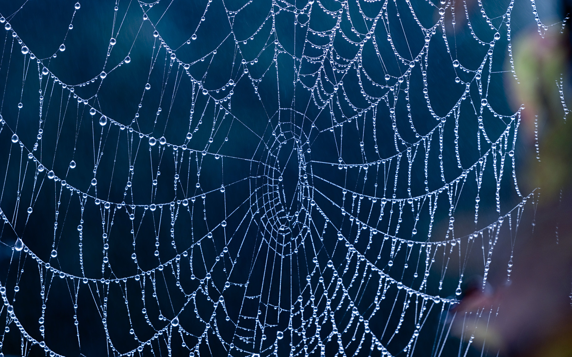 how to make spider web fluid