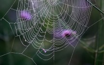 Incredible Spiderweb Wallpapers With Water Drops And