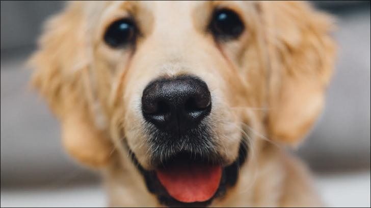 Dogs at work – are we missing a trick?