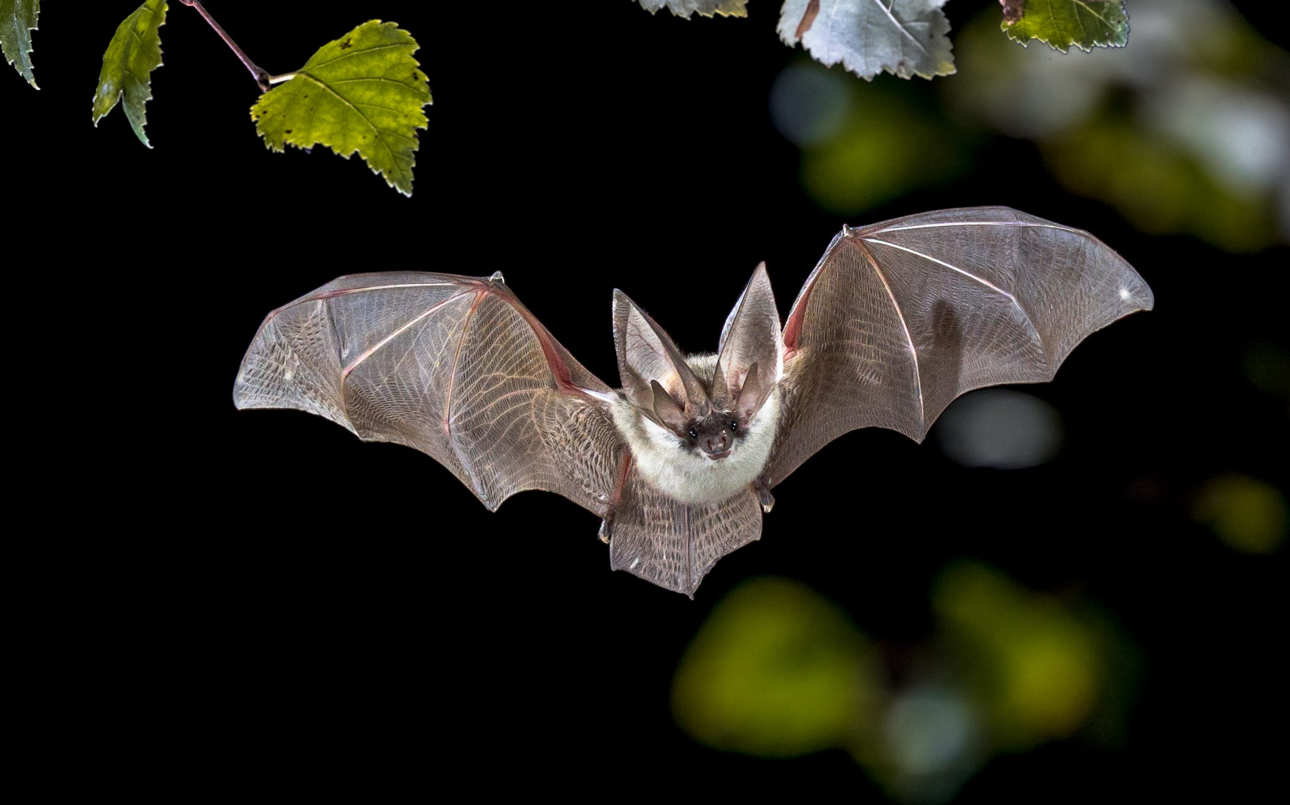 Bat Series – Here comes the night