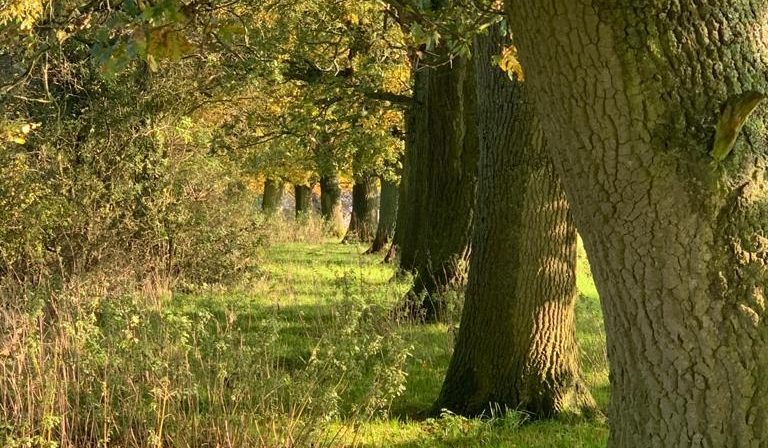 Failures To Protect Vital Ecology And Protect Biodiversity At Leather Lane And Other Sites Along HS2 Line – Report