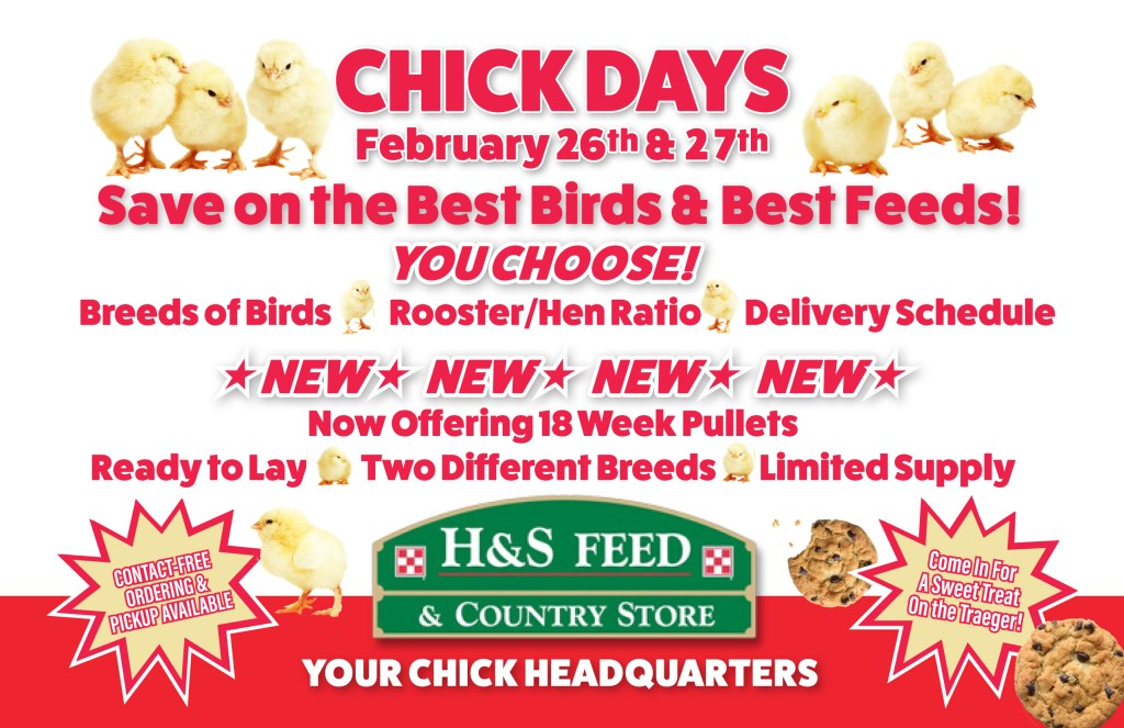 H&S 2021 chick days postcard