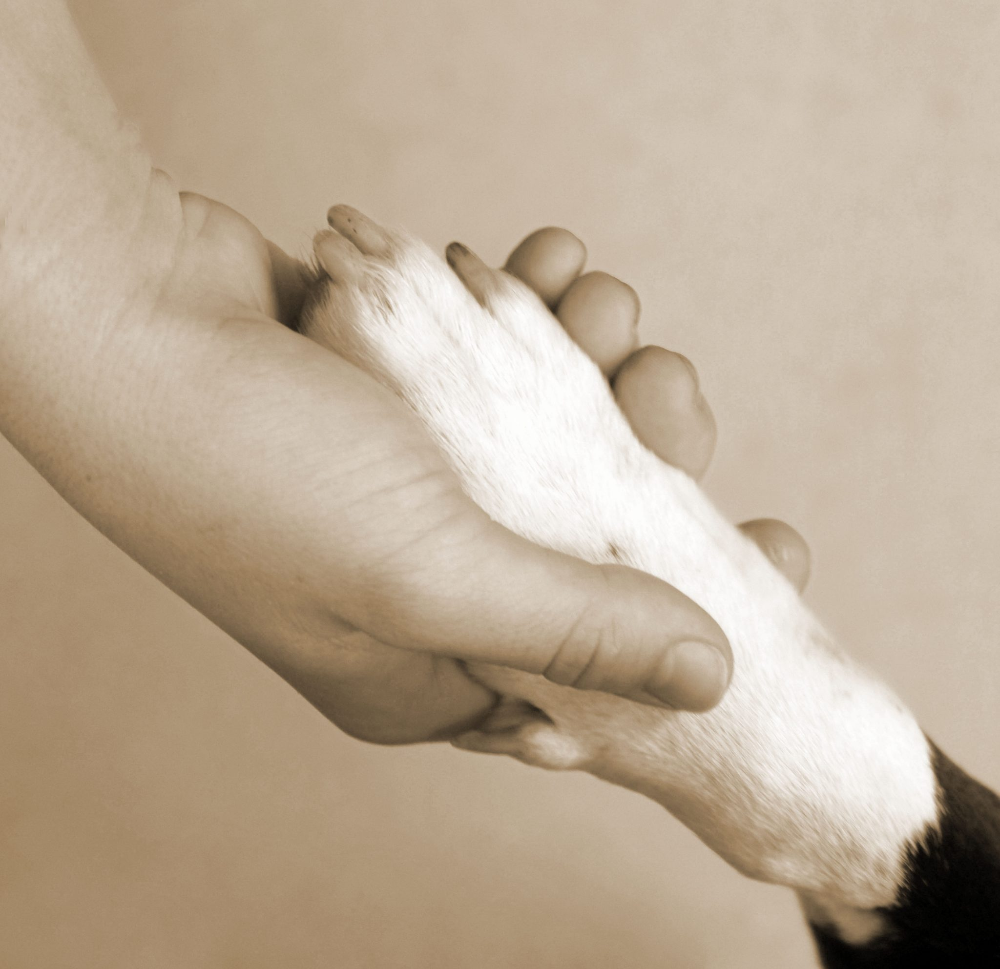 someone holding an animal's paw