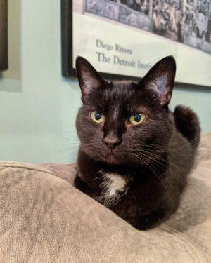 Wonderful cat needs new home