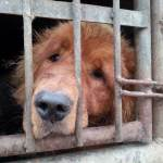 Dog rescued from the dog meat trade