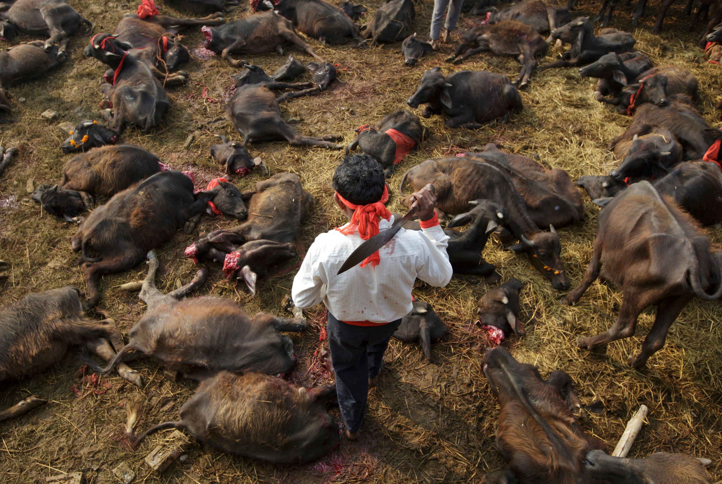 Gadhimai deaths