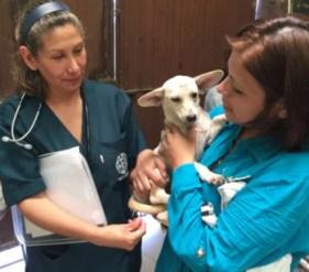 HSI veterinary training and spay/neuter clinic