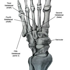 Bones In Your Foot Diagram Shopping Cart Class Stress Fractures Of The And Ankle An Overview Anatomical Drawing Showing Metatarsal Navicular