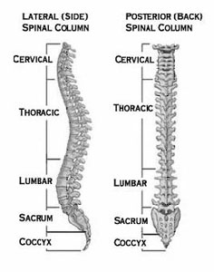 An In-Depth Overview of Low Back Pain
