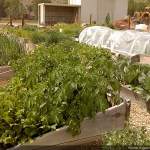 Grand Community Garden