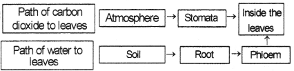 Kerala Syllabus 9th Standard Biology Solutions Chapter 1 Protectors of Biosphere 6