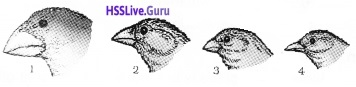 Plus Two Zoology Chapter Wise Questions and Answers Chapter 5 Evolution - 7