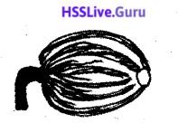 Kerala SSLC Biology Model Question Paper 3 English Medium - 5