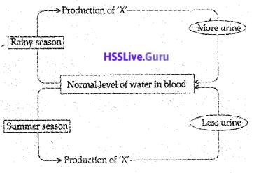 Kerala SSLC Biology Model Question Paper 3 English Medium - 8