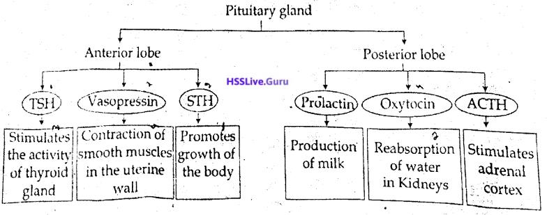 Kerala SSLC Biology Previous Year Question Paper March 2019 English Medium - 10