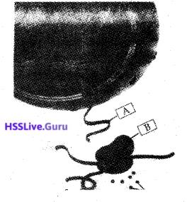 Kerala SSLC Biology Previous Year Question Paper March 2019 English Medium - 11