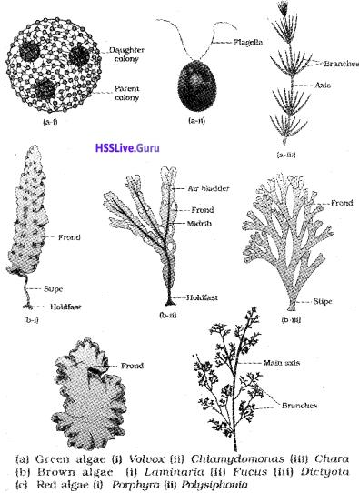 Plus One Botany Notes Chapter 2 Plant Kingdom 1