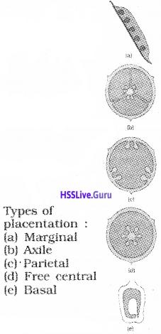 Plus One Botany Notes Chapter 3 Morphology of Flowering Plants 16