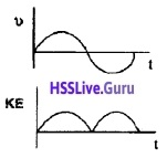 Plus One Physics Chapter Wise Questions and Answers Chapter 14 Oscillations - 1
